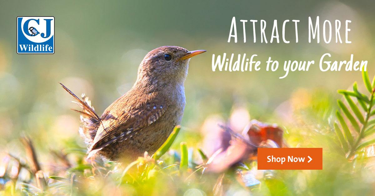 Attracting wildlife