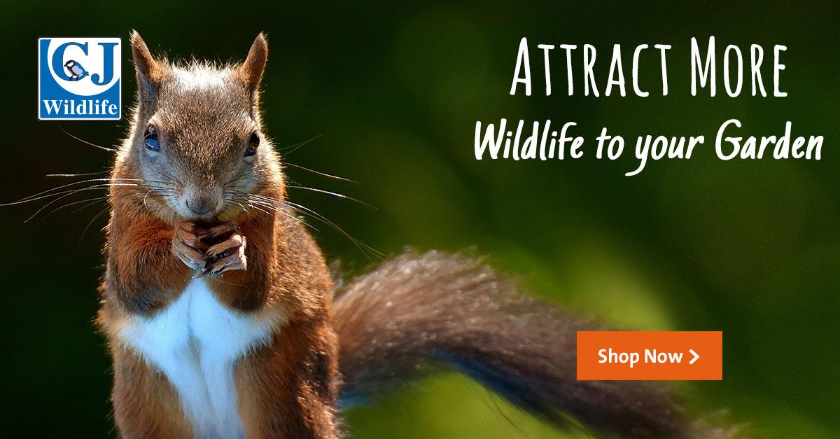 Attracts wildlife