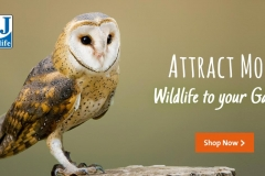 Attract wildlife